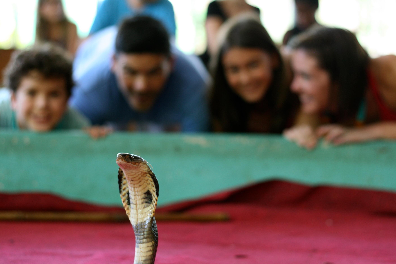 Snake Shows in Phuket | Holidays Guide Phuket